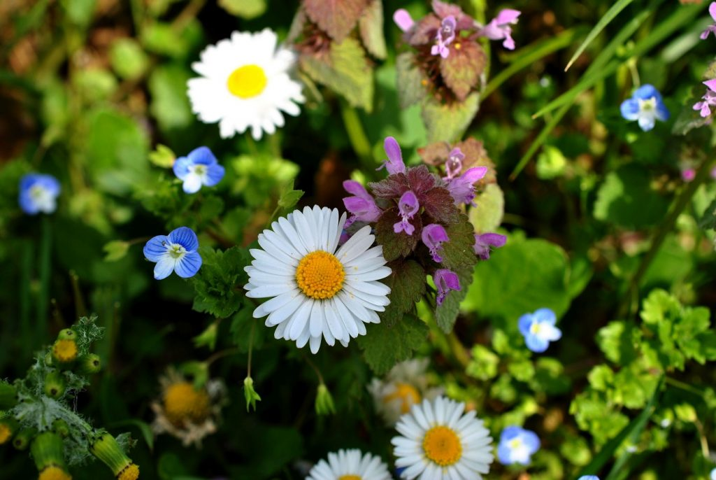 Blumenwiese - Copyright A. Hakala