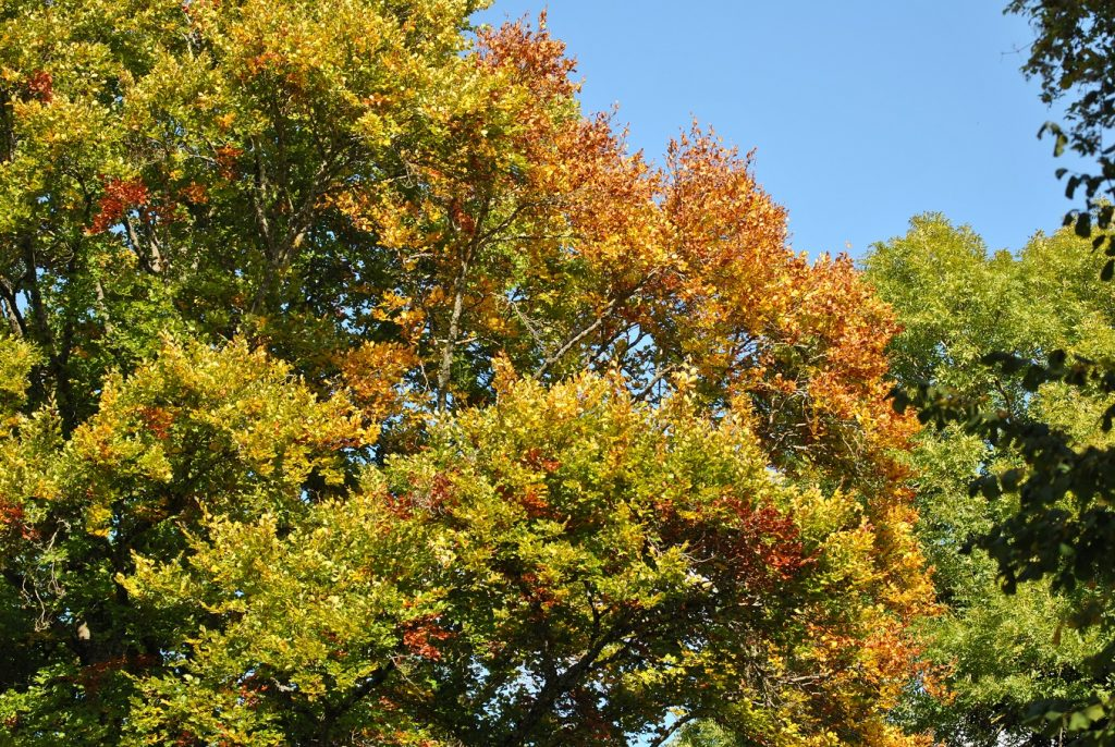 Herbst - Copyright A. Hakala